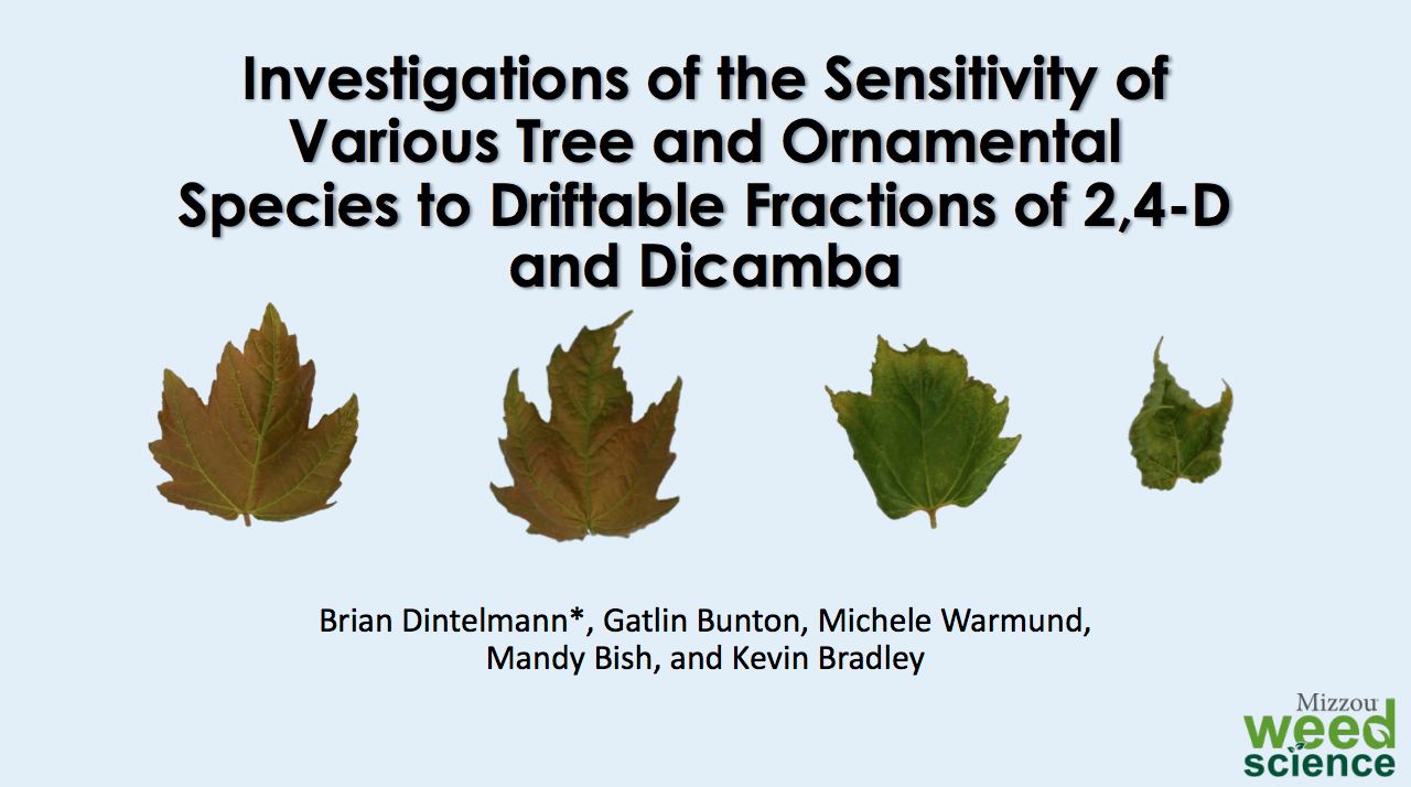 Sensitivity of Tree and Ornamentals to Auxins