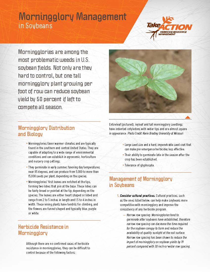 FactSheet_Morningglory